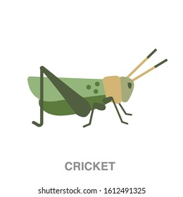 Cricket insect flat icon on white transparent background. You can be used cricket insect icon for several purposes.