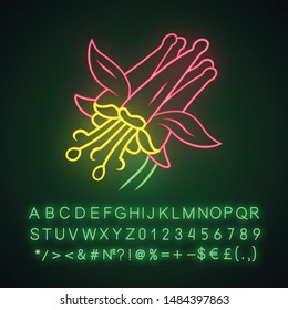 Crimson columbine neon light icon. Aquilegia formosa. Blooming wildflower. Spring blossom. Red columbine. Wild herbaceous plant. Glowing sign with alphabet, numbers. Vector isolated illustration