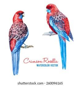 Crimson Rosella, Platycercus elegans, parrot, australia, watercolor, vector, red
