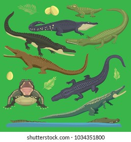 Crocodile alligator green vector reptile illustration of wild animals set collection cartoon style. Cartoon green crocodile reptile open mouth and front top view, old and young reptile