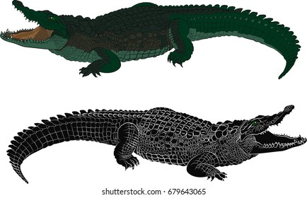 Crocodile color and black silhouette. Vector illustration