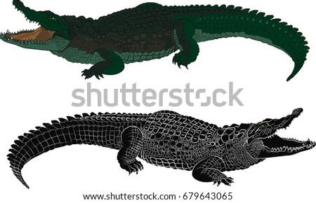 Crocodile Color Black Silhouette Vector Illustration Vector de stock ...