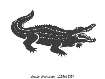 Crocodile isolated on white background.  Vector illustration.