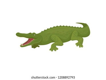 Crocodile with open toothy mouth, predatory amphibian animal vector Illustration on a white background