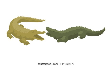 Crocodile vector cartoon crocodilian character of green alligator carnivore illustration animalistic set of dangerous amphibian predator with jaws isolated on white background