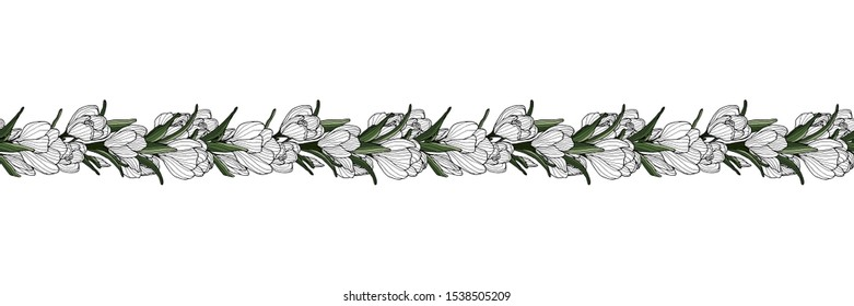 Crocus decoration border with hand drawn crocus flower. Botanical decoration