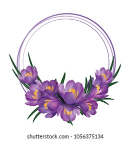 Crocus flower wreath isolated on white. Crocus flower garland.