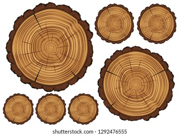 Cross section of tree stum...olated on white vector