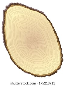 Cross section of tree stump isolated on white background, vector illustration