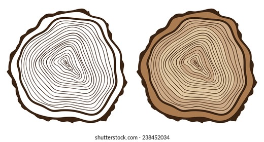 Cross section of tree stump. Tree rings background.