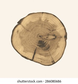 Cross section of a tree trunk and stump. Structure of wood. Round cut with annual rings