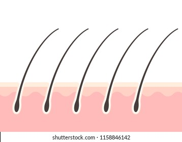 Cross-sectional view of the scalp