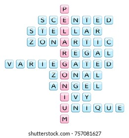 Crossword for the word Pelargonium and related words: groups and types of the plant (Scented, Stellar, Zonartic, Regal, Variegated, Zonal, Angel, Ivy, Unique), vector illustration