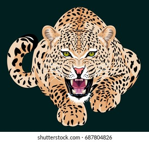 Crouching Bragged Spotted Leopard