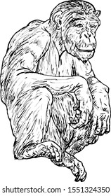 A crouching chimpanzee. Hand drawn vector illustration.
