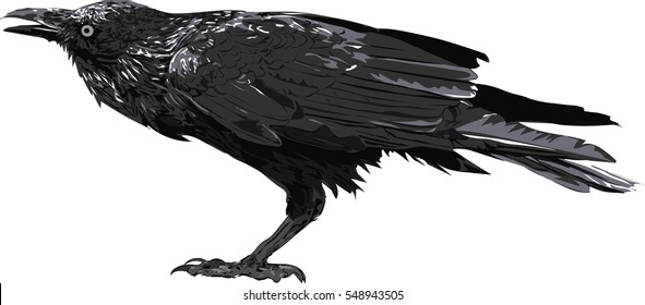 Crow art - Illustration of the black crow. High Detailed Vector Art.