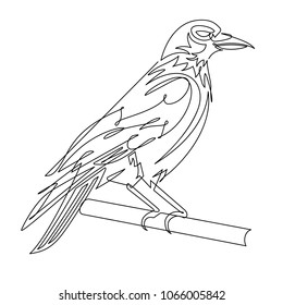 Crow Continuous Line Vector Illustration