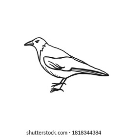 Crow illustration isolated on white background. Vector icon of a bird