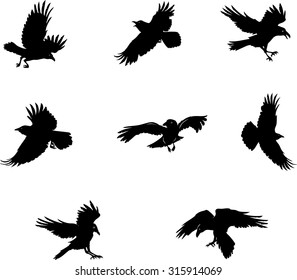 crow, raven, flying, vector, silhouette, image