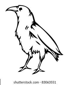 Crow raven , vector illustration