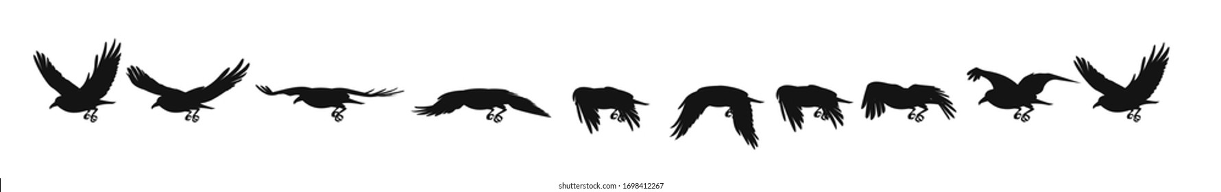 Crow or rook. Black flying raven, sequences for ready 2d animation.