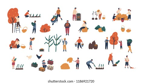 Crowd of tiny people gathering crops or seasonal harvest. Bundle of men and women collecting ripe fruits, berries and vegetables isolated on white background. Flat cartoon vector illustration.