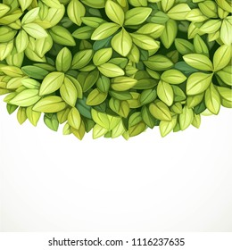 Crown tree from green oblong leaves isolated on white background place for text