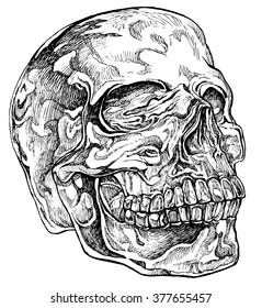 Crystal skull - hand drawn vector illustration, isolated on white