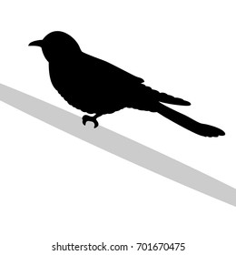 Cuckoo bird  black silhouette animal. Vector Illustrator.