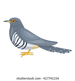 Cuckoo bird vector illustration isolated on a white background