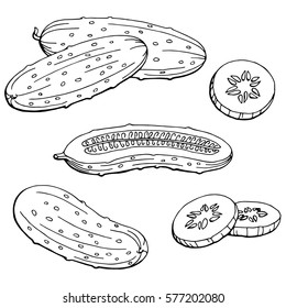 Cucumber graphic black white isolated sketch illustration vector