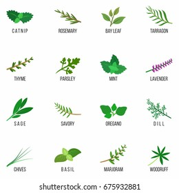 Culinary herbs icons set. Rosemary, Lavender, Sage, Dill, Basil, Bay, Thyme, Oregano, Mint, Parsley. Isolated. Vector illustration.