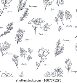 Culinary herbs seamless pattern/ Hand drawn doodles floral background.