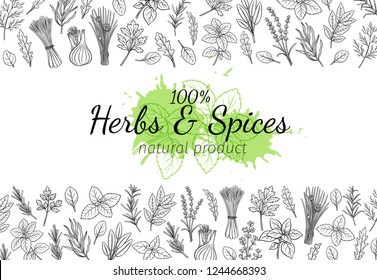 Culinary herbs and spice layout page. Bay leaf, lemongrass, fennel, dill, cilantro and chives. Thyme, lemon balm, tarragon etc. Seasoning food design. Retro vector illustration.