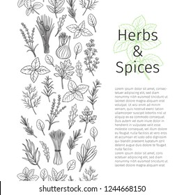Culinary herbs and spice seamless border. Bay leaf, lemongrass, fennel, dill, cilantro and chives. Thyme, lemon balm, tarragon etc. Seasoning food page design. Vector illustration.