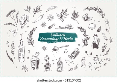 Culinary seasonings and herbs. Set sketch icons. isolated vector. vintage. graphic elements for design restaurant menus and decorating cookbooks and recipes