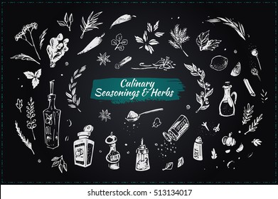 Culinary seasonings & herbs. Set sketch icons. isolated vector. chalk on blackboard. elements for design restaurant menus and decorating cookbooks & recipes