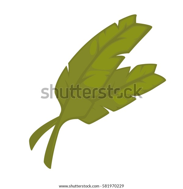 Curry leaves hand drawn isolated on white. Green leaves cooking seasoning ingredient. Realistic vector illustration of pot plant widely used in home decor, big leaves for flower bouquets composition