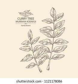 Curry Leaf Drawing High Res Stock Images Shutterstock