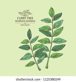 Curry tree: branch and curry leaves. Murraya koenigii. Vector hand drawn illustration.