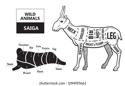 Cut of antelope set. Poster Butcher diagram - Saiga. Vintage typographic hand-drawn. Vector illustration