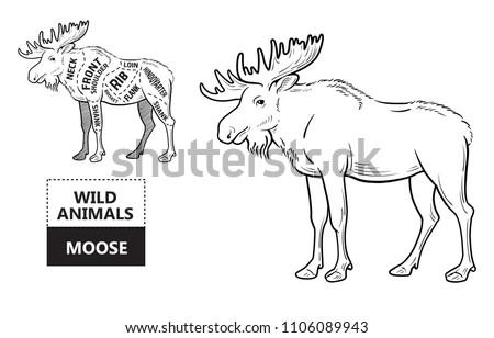 cut elk set poster butcher diagram stock vector (royalty freecut of elk set poster butcher diagram moose vintage typographic hand drawn