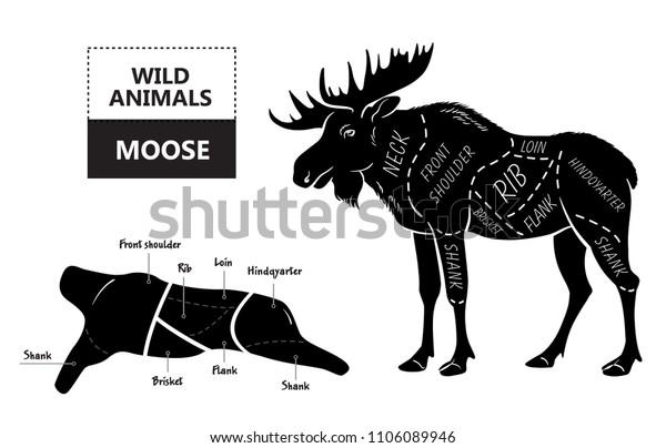 cut elk set poster butcher diagram stock vector (royalty Diagram Of Moose Cuts diagram of moose cuts wiring diagram
