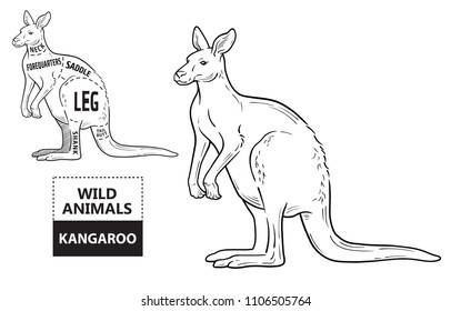 Kangaroo meat images stock photos vectors shutterstock poster butcher diagram desert ship vintage typographic hand ccuart Choice Image