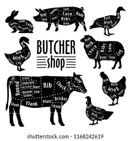 Cut of meat, diagram for butcher. Poster for butcher shop. Guide for cutting. Vector illustration.