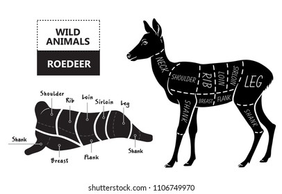 Cut of roedeer set. Poster Butcher diagram - roe. Vintage typographic hand-drawn. Vector illustration