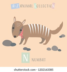 Cute adorable animals alphabet letter for children education A to Z Numbat background