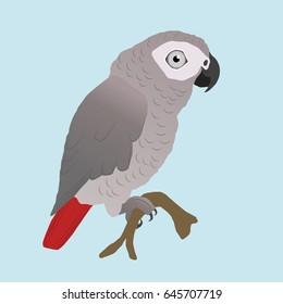 Cute African grey parrot