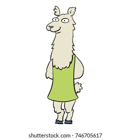 Cute animal from Argentina: llama