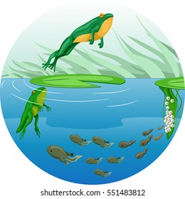 Cute Animal Illustration Featuring the Life Cycle of a Frog Starting from a Tadpole to a Full Grown Adult